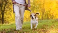 Τι λέει ο νόμος για τη βόλτα με τον σκύλο μου