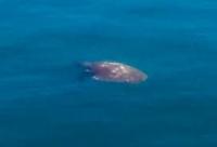 Νεκρή θαλάσσια χελώνα ξεβράστηκε στην Καβάλα (ΦΩΤΟ)