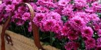 6 φυτά που λειτουργούν ως εντομοαπωθητικά - Διώχνουν κουνούπια, μύγες, μυρμήγκια