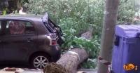 Θεσσαλονίκη: Δέντρο έπεσε στη μέση του δρόμου - Ζημιές σε ΙΧ (φωτό)